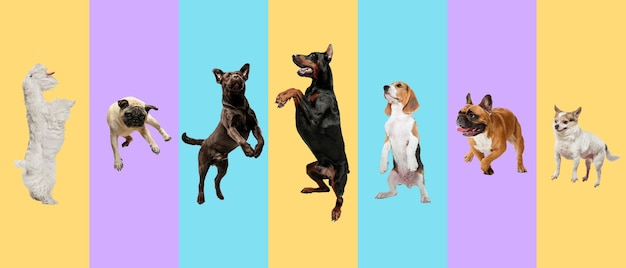 Młode psy, zwierzęta domowe skaczące wysoko, latające. słodkie pieski lub zwierzęta wyglądają na szczęśliwe na białym tle na wielobarwnym tle. zdjęcia studyjne. kreatywny kolaż różnych ras psów. ulotka do reklamy.