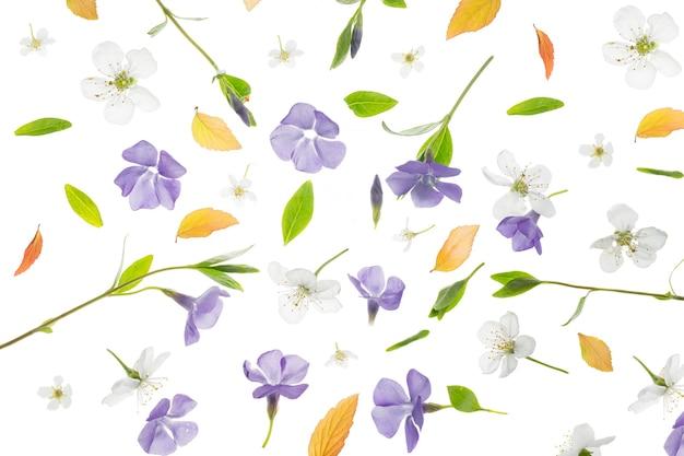 Młode, świeże, zielone liście, barwinek i kwiaty wiśni. piękna wiosna sezonowe tło.
