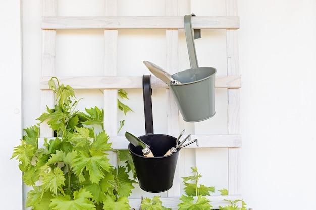 Młode winogrona i narzędzia do sortowania. balkon, ogród, hobby, koncepcja wypoczynku
