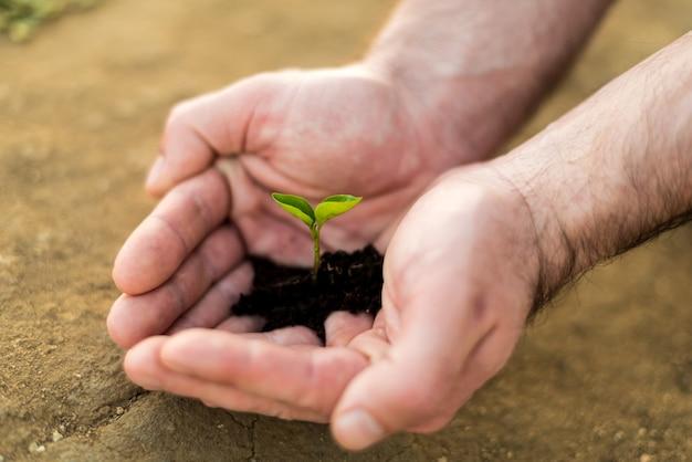 Młode zielone kiełki trzymając się za ręce