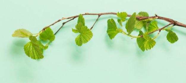 Młode zielone liście na gałęziach na tle papieru