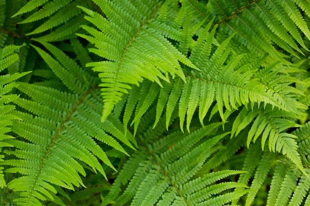 Młode zielone paproci bujne i liście