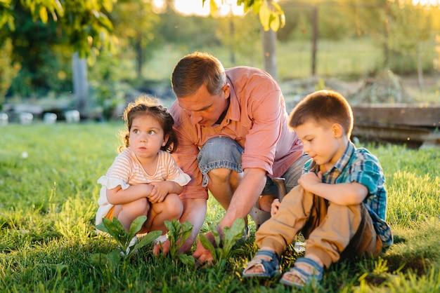 Młodszy brat i siostra sadzą sadzonki wraz z ojcem w pięknym wiosennym ogrodzie o zachodzie słońca. nowe życie. ratować środowisko. ostrożne podejście do otaczającego świata i przyrody.