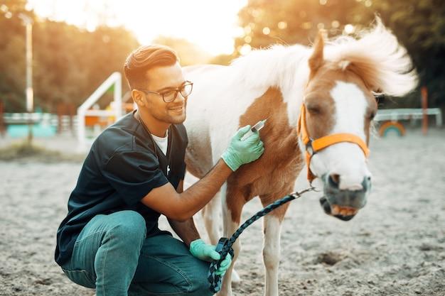 Młody atrakcyjny męski lekarz weterynarii daje zastrzyk małemu uroczemu kucykowi koniowi.