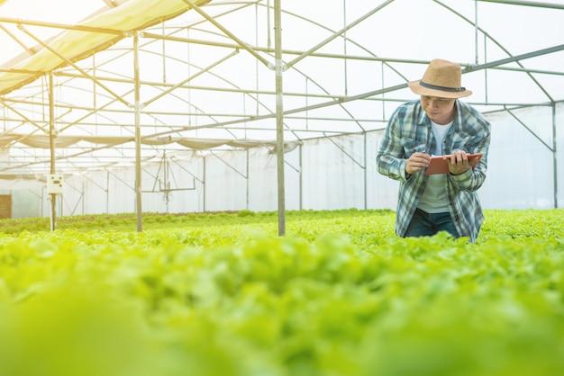 Młody atrakcyjny mężczyzna azjatyckich zbiorów sałatki ze świeżych warzyw z jego farmy hydroponicznej w szklarni przed wysłaniem do sprzedaży na rynku.