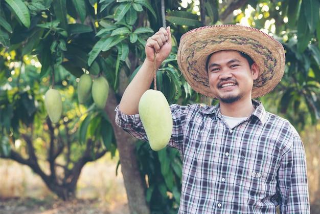 Młody azjatycki średniorolny zrywanie i przedstawienie mangowa owoc w organicznie gospodarstwie rolnym, tajlandia