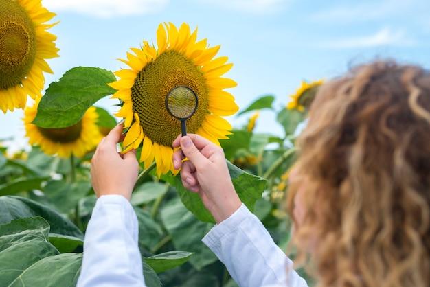 Młody, bardzo doświadczony agronom w dziedzinie słonecznika sprawdzający jakość upraw