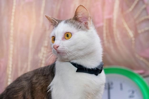 Młody biały cętkowany kot siedzi w pokoju obok zegara