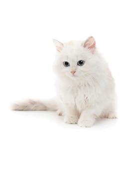 Młody biały kot