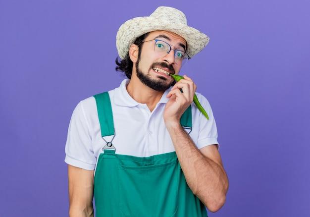 Młody brodaty mężczyzna ogrodnik ubrany w kombinezon i kapelusz pokazujący zieloną ostrą papryczkę chili, patrzący uśmiechnięty zdezorientowany, stojący na niebieskim tle