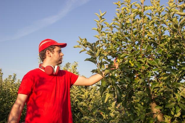Młody chłopak w czerwonej koszuli i czapce zbieranie jabłek, słuchanie muzyki w czerwonych słuchawkach.