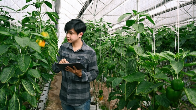 Młody człowiek agronom podczas kontroli za pomocą cyfrowego tabletu w szklarni.