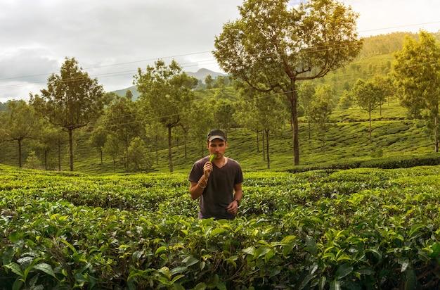 Młody człowiek degustuje krzew herbaciany na plantację herbaty. turysta w munnar kerala w indiach.