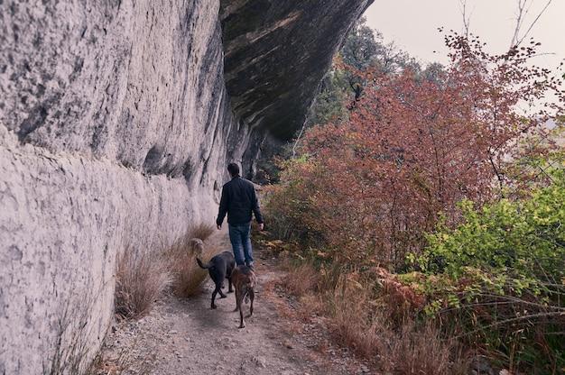 Młody człowiek idzie za wodospadem z psami