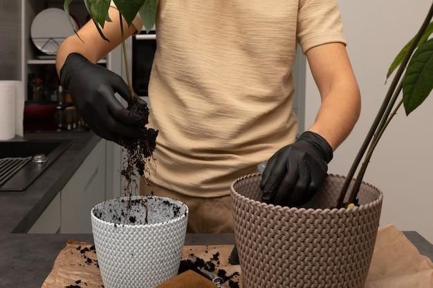 Młody człowiek przenosi roślinę do nowej doniczki