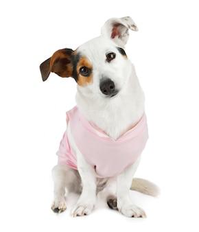 Młody jack russel z różową sukienką
