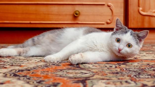Młody kot leży w pokoju na podłodze