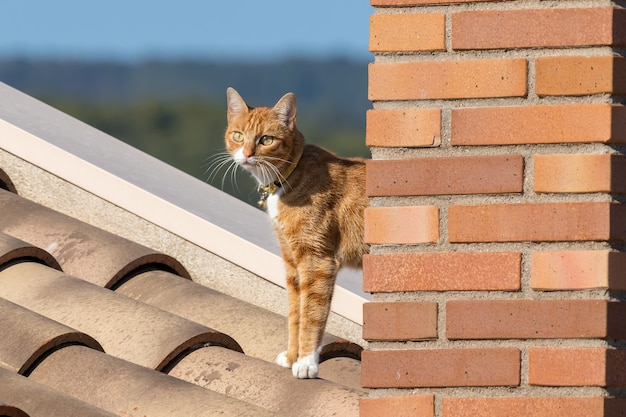 Młody kot pozuje do zdjęcia na dachu domu