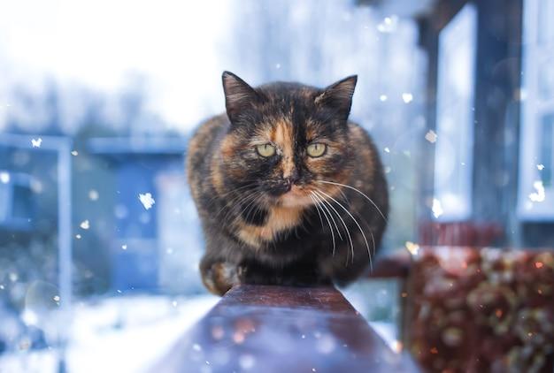 Młody kot siedzi na drewnianej balustradzie w pobliżu wiejskiego domu na zewnątrz w zimie.
