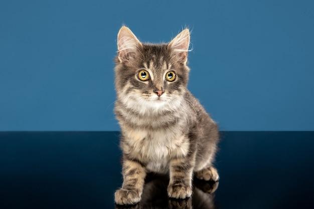 Młody kot siedzi