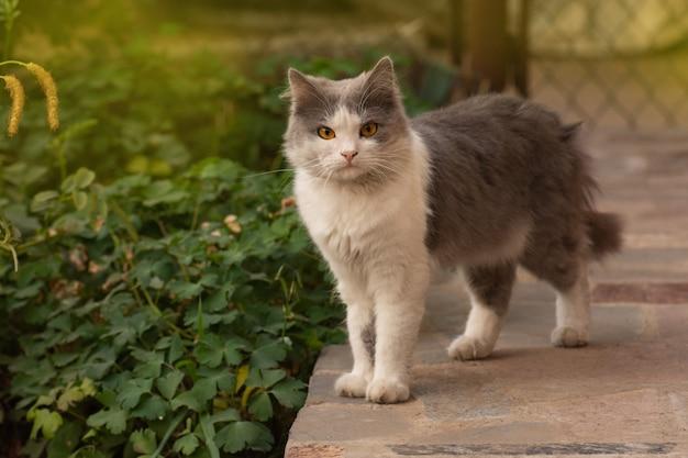 Młody kot spaceruje i cieszy się pięknym ogrodem. brudny kot stoi na łące.