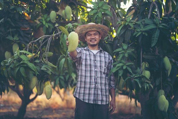 Młody mądrze rolnik, mordern mango gospodarstwo rolne