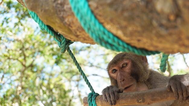Młody makak małpa o wielobarwnych oczach siedzi na gałęzi drzewa. makak małpa w lesie tropikalnym. małpy w środowisku naturalnym. chiny