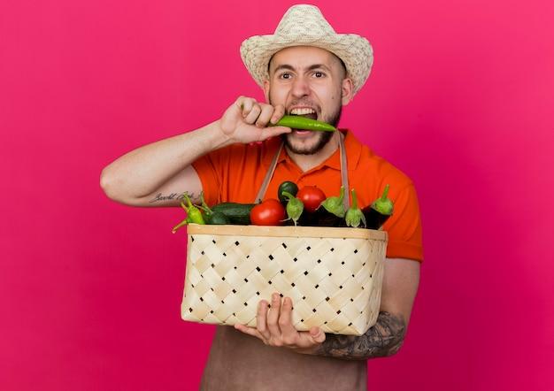 Młody mężczyzna ogrodnik w kapeluszu ogrodniczym trzyma kosz warzyw i udaje, że gryzie ostrą paprykę