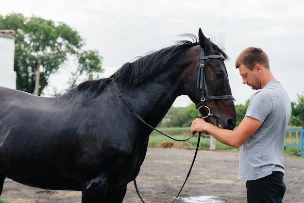 Młody mężczyzna stoi i patrzy na rasowego ogiera na ranczu. hodowla i hodowla koni pełnej krwi.
