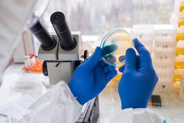 Młody mężczyzna technik laboratoryjny sprawdza płytkę petriego z agarem i bakteriami. otwarcie naukowca w laboratorium. badania biologiczne