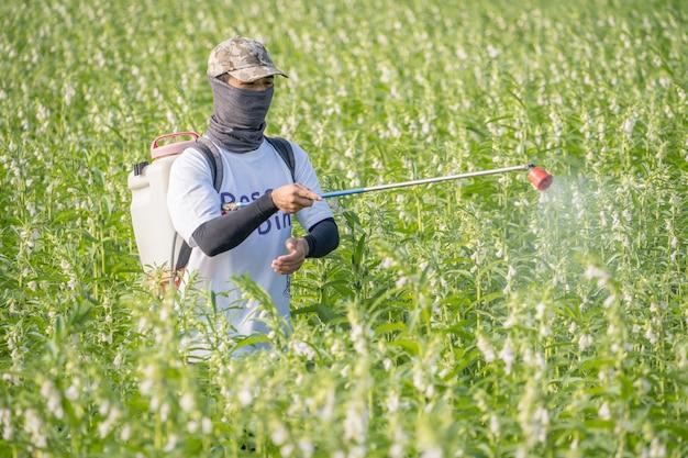 Młody pan rolnik rozpyla pestycydy (chemikalia rolnicze) na własnym polu sezamu, aby zapobiec szkodnikom i chorobom roślin rano, z bliska, xigang, tainan, tajwan