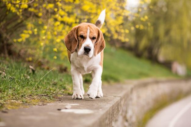 Młody pies spacerowy na zewnątrz spaceru