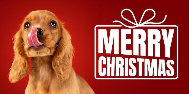 Młody pies, szczeniak lub zwierzę na białym tle na czerwonym tle studio życzy szczęśliwego nowego roku i wesołych świąt. koncepcja bożego narodzenia, 2020 nowy rok, zimowy nastrój. lato, ulotka, pocztówka. emocje, zwierzęta.