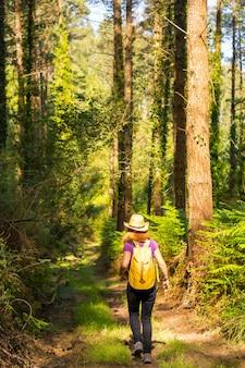 Młody poszukiwacz przygód w kapeluszu z żółtym plecakiem w leśnych sosnach
