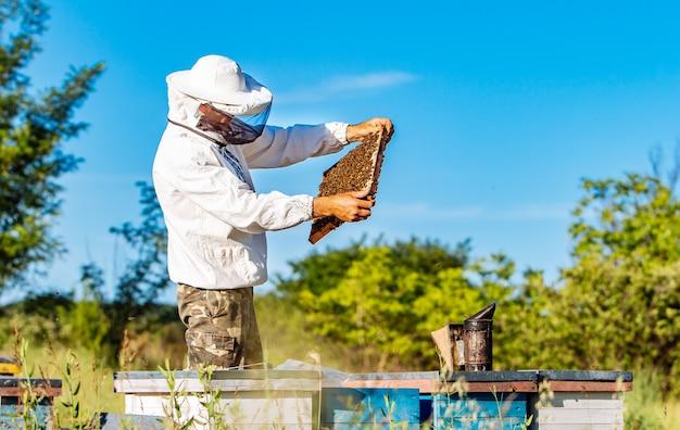 Młody pszczelarz pracuje w pasiece.