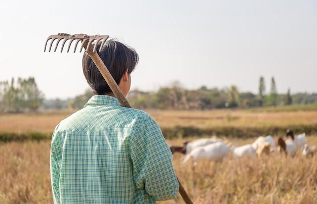 Młody rolnik człowiek z widłami patrząc kozy jedzą trawę w polu