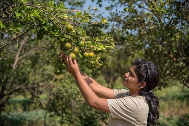 Młody rolnik dziewczyna trzyma i bada słodkie pomarańcze z drzew w ręce.