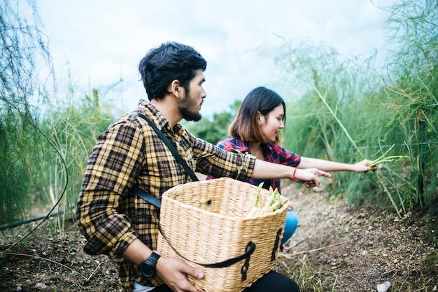 Młody rolnik para zbiorów świeżych szparagów z ręką razem włożyć do kosza.