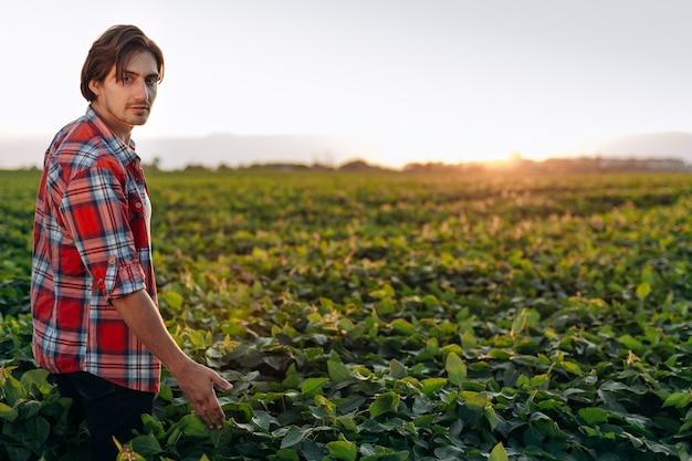 Młody rolnik stojący na polu soi o zachodzie słońca