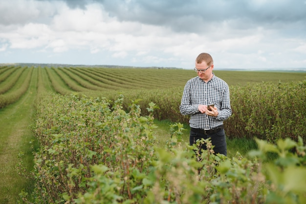 Młody rolnik z tabletem na polu porzeczki. uprawa owoców i jagód. rolnik sprawdza uprawę porzeczki