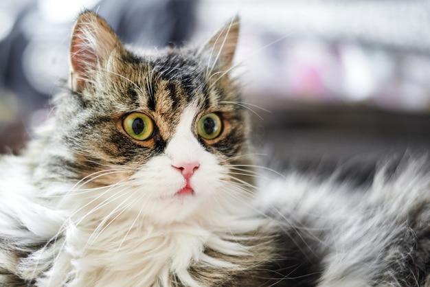 Młody śliczny domowy kot w domu