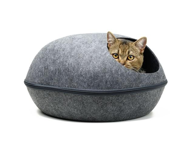 Młody szary kot szkocka szynszyla wyprostowany siedzi w owalnym szarym filcowym domu na białej powierzchni. miejsce do spania i odpoczynku