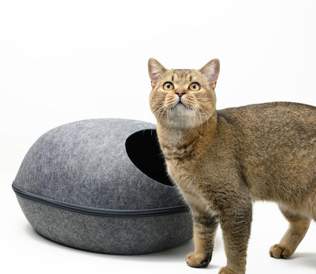 Młody szary kot szynszyla szkocka i owalny szary filcowy dom na białym tle. miejsce do spania i odpoczynku