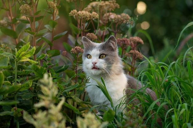 Młody szary kot zjada świeżą zieloną trawę (mięta kota) wśród kwitnących kwiatów. długowłosy kot jedzenie trawy w ogrodzie w słoneczny dzień.