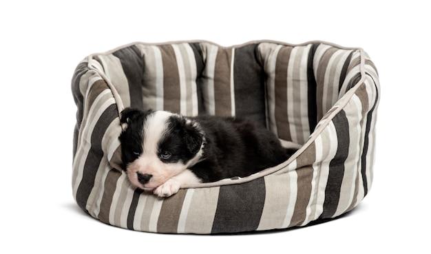 Młody szczeniak mieszaniec spanie w łóżeczku na białym tle