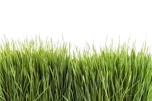 Młody zielony wheatgrass studio strzał na białym tle