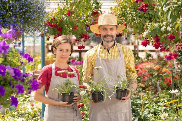 Młodzi i dojrzali ogrodnicy z kwiatami doniczkowymi stojącymi między rabatami w dużym centrum ogrodniczym