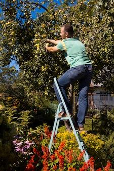 Młodzi ludzie zbierają jabłka