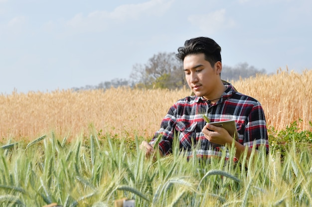 Młodzi mężczyźni używają laptopów. badania odmian jęczmienia na poletkach doświadczalnych, koncepcjach rolniczych i technologicznych.