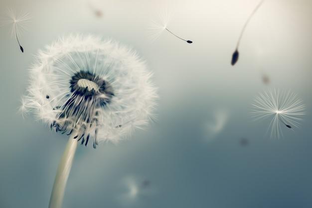 Mniszek lekarski latający nasiona na wietrze na jasnym tle efektu malarstwa olejnego